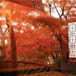 紅葉狩りは箱根美術館で!見ごろの時期とアクセスは?