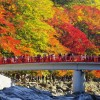 紅葉狩りを香嵐渓で楽しむ!見ごろの時期とアクセスを紹介