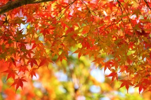 autumn-leaves_00014